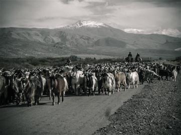 El Manzano - Malargue - Traffic jam, Argentina